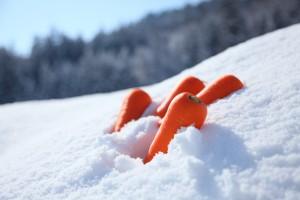 雪下にんじん