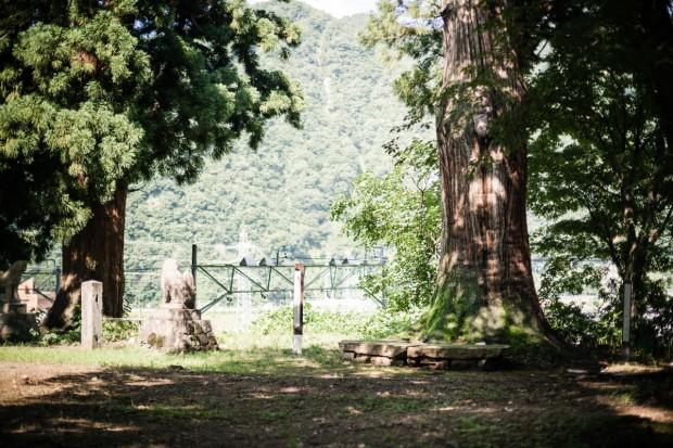 平らな岩と、その脇に立つ樹齢約400年の大杉
