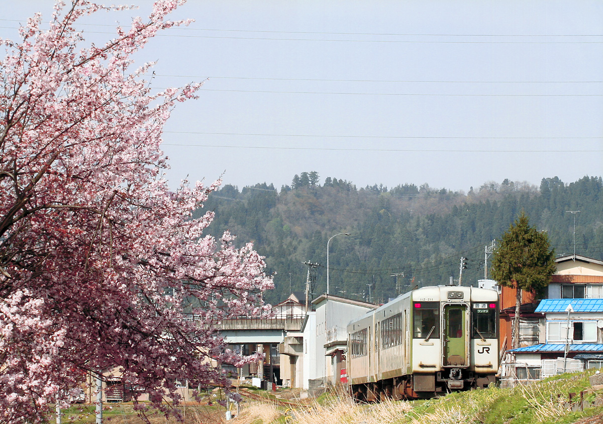 飯山線と桜