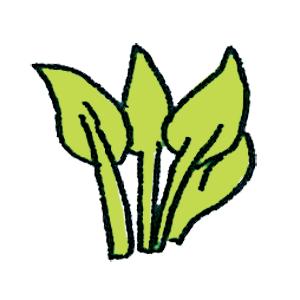 オオバギボウシの画像 p1_3