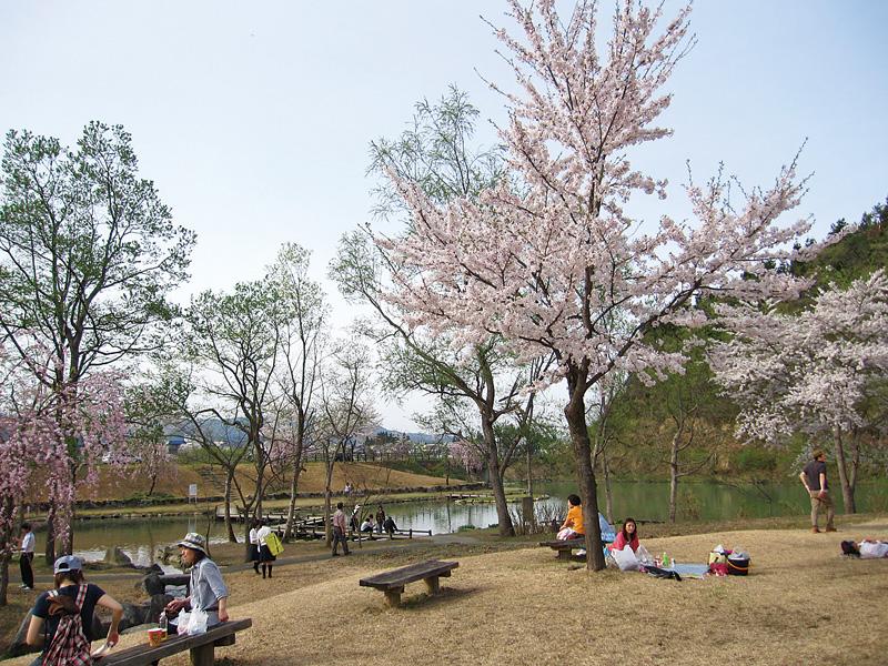 銭淵公園観桜会