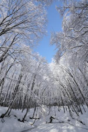 美人林(冬)池のほとりで
